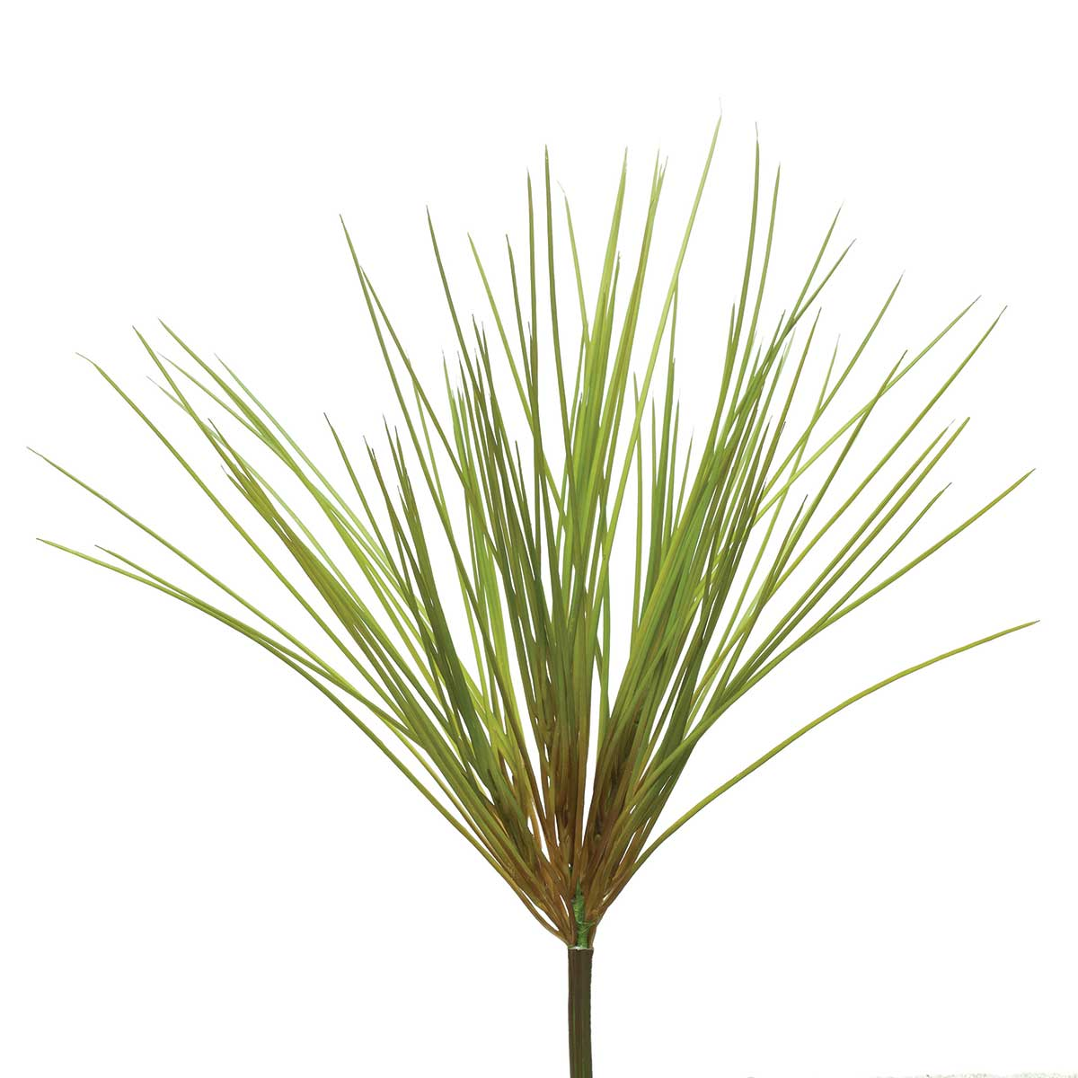"WHOOPI GRASS 19"" BUSH"