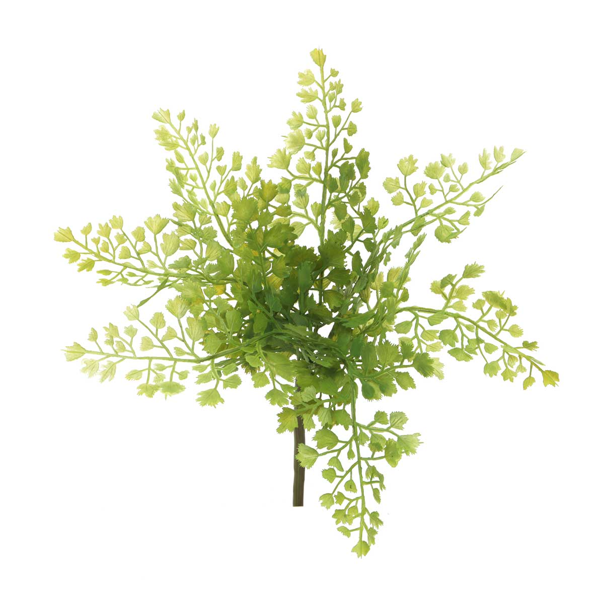 "Maidenhair Fern 12""x10.5"""