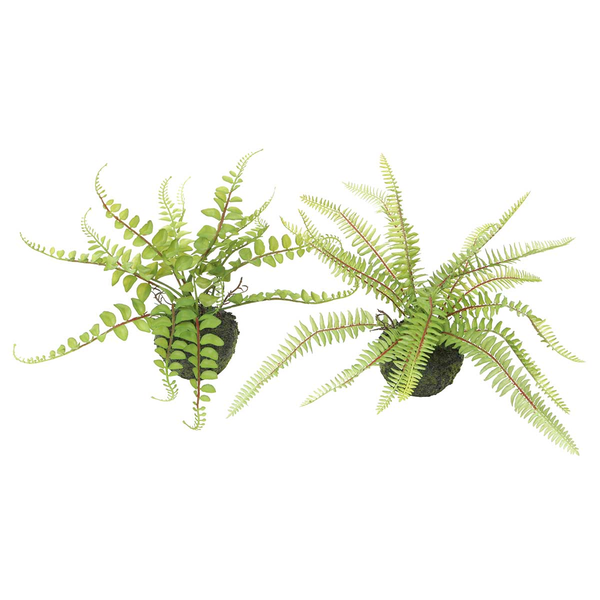 "Fern with Faux Dirt(3.5""x2"") Button/Boston Assorted 15""x11""/16.5"