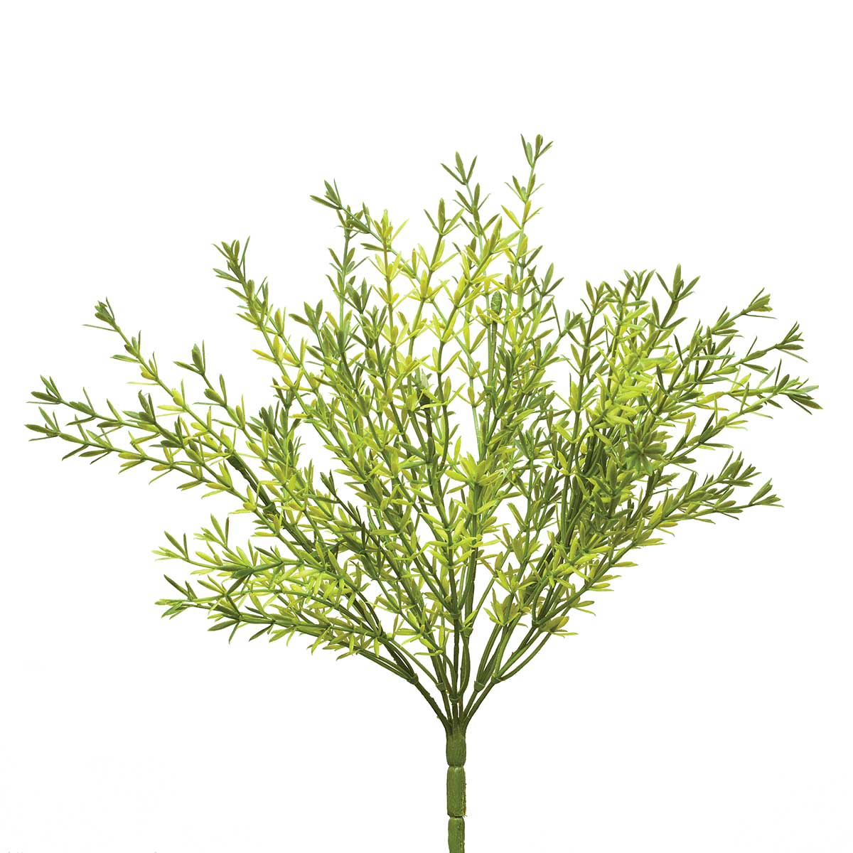 "Asparagus Bush X6 7""x13"" Light Green"