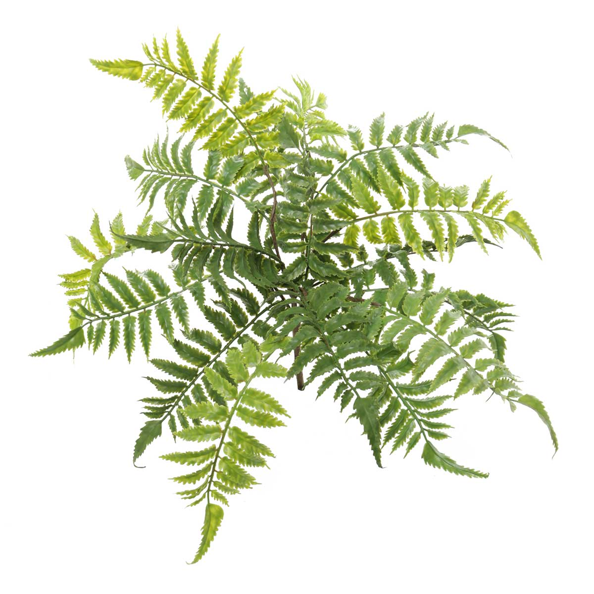 "DECORATIVE FOREST FERN 18.5""X17"""