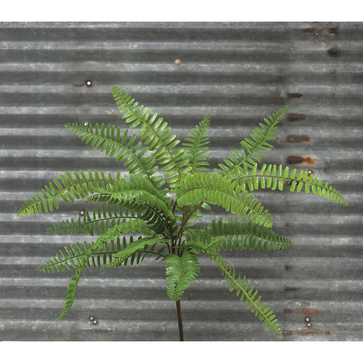 "DECORATIVE BOSTON FERN 17""X18"""