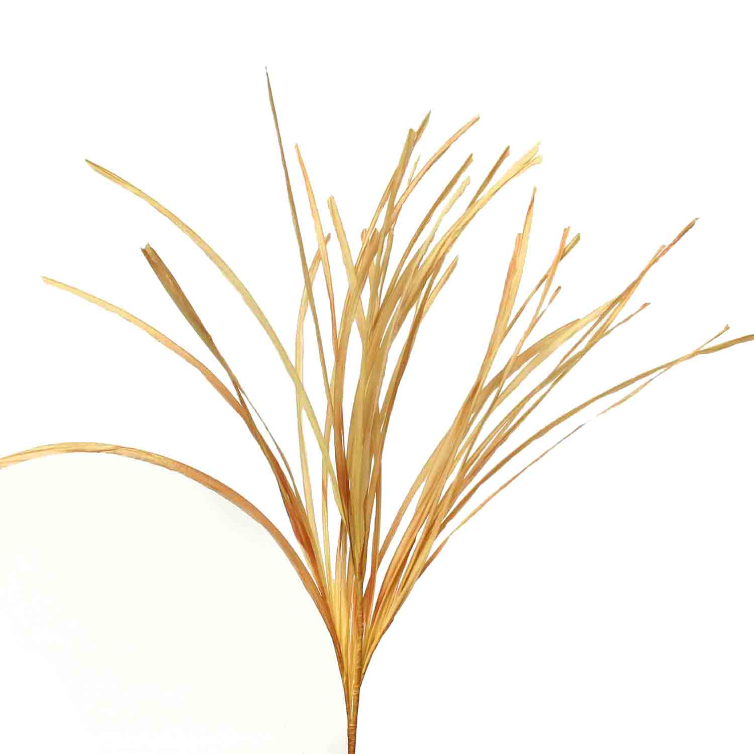 "AUTUMN GRASS SPRAY 46"" Beige"
