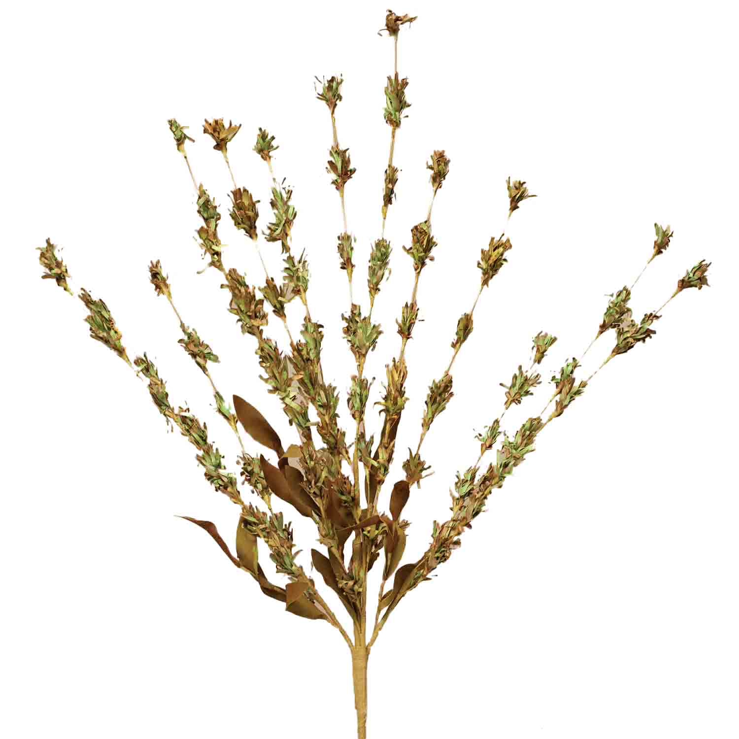 "DRIED 29"" PRAIRIE GRASS BUSH Sage"
