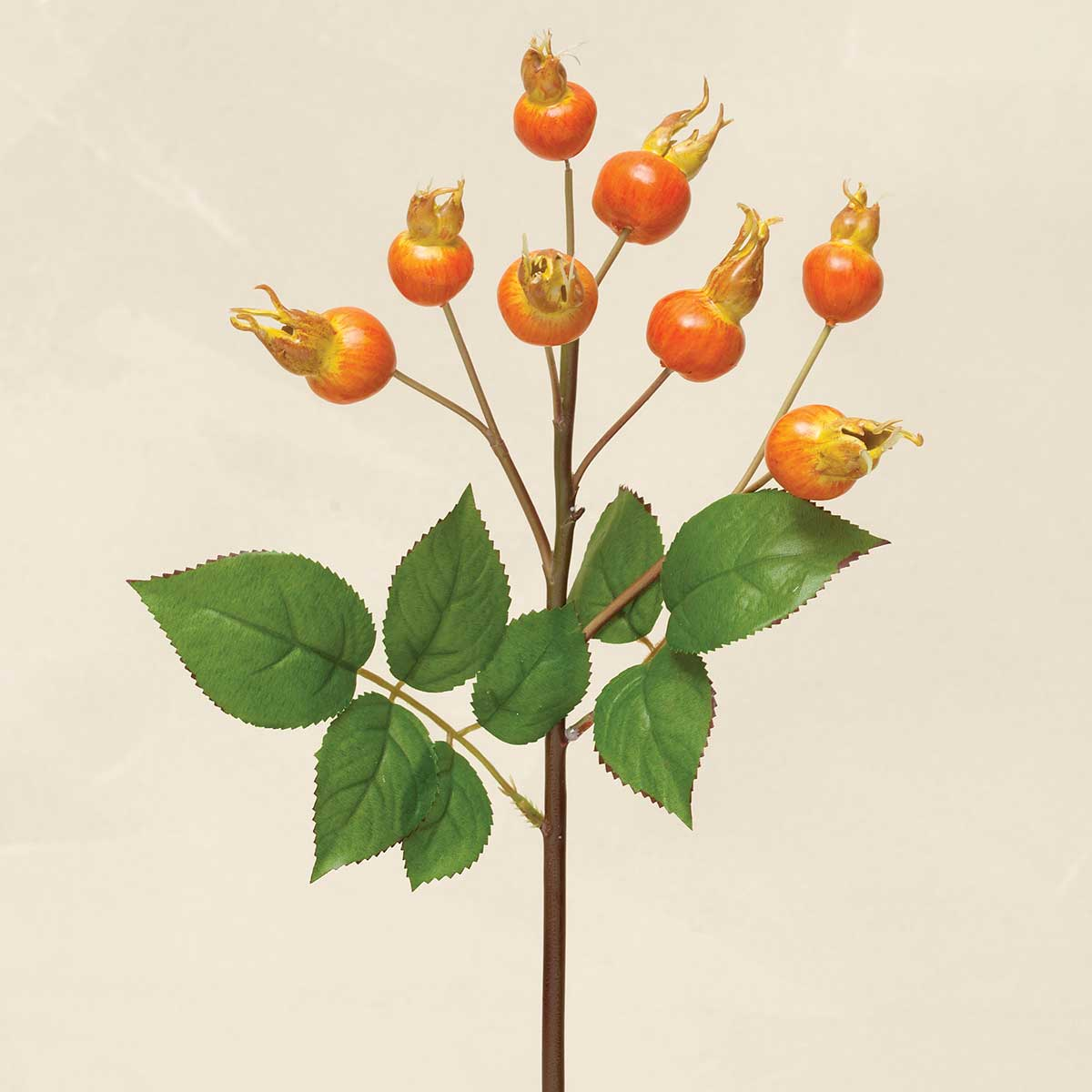 ROSEHIP BERRY CLUSTER 17""