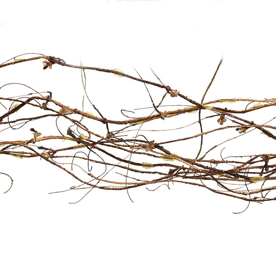 TWIG GARLAND 12' BROWN