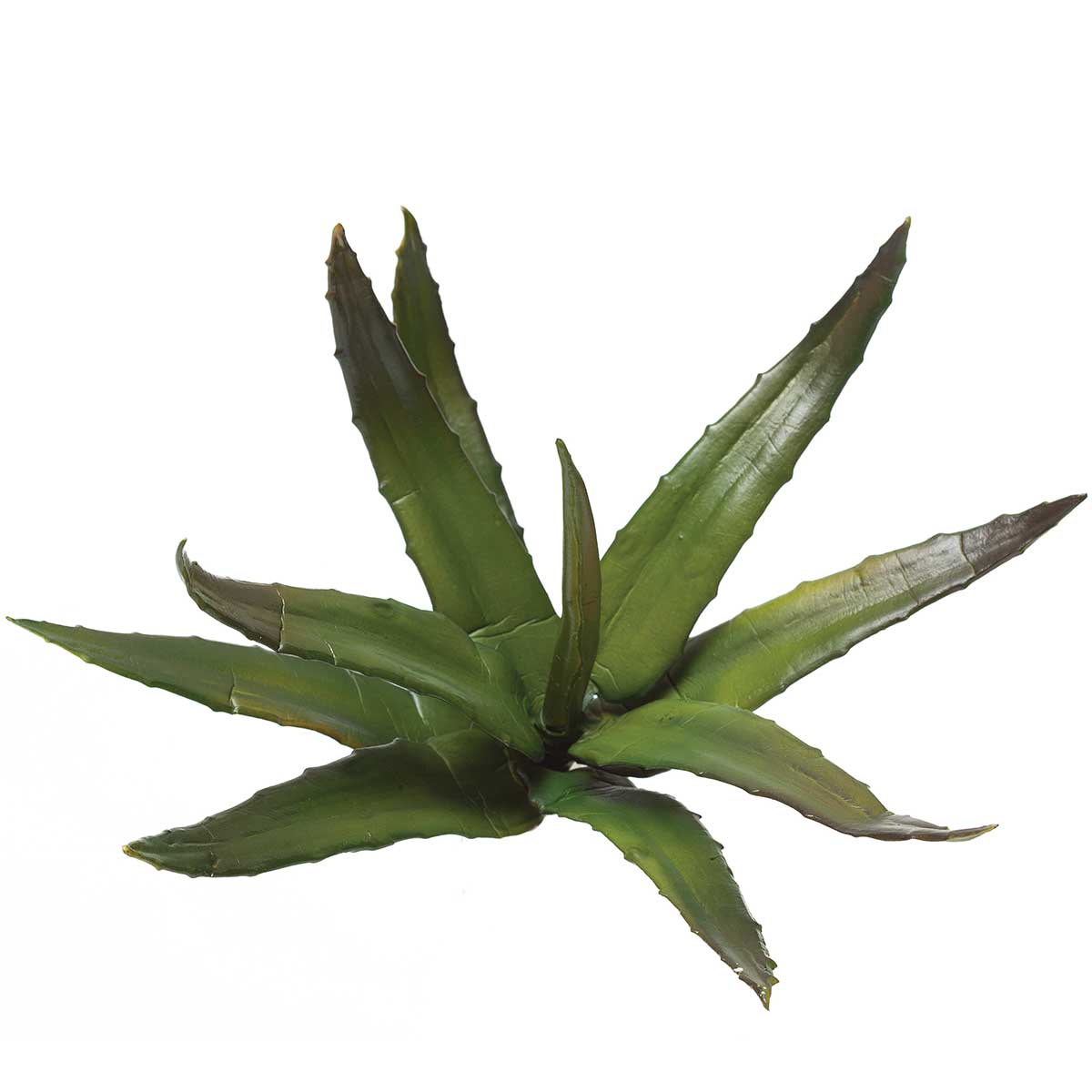 "M8400 AGAVE PLANT 9 LEAVES 9"" - EACH"