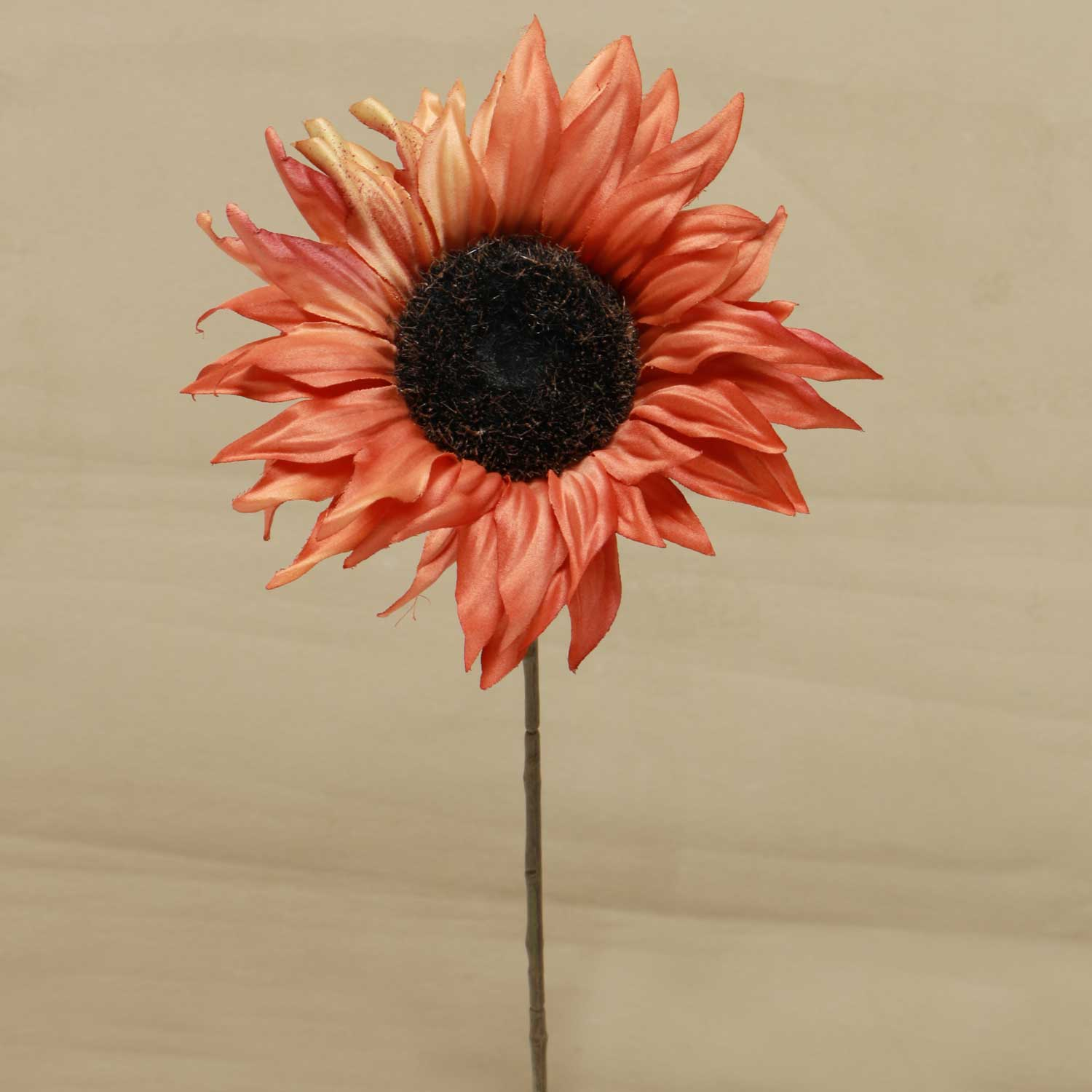 "M8654 CL SUNFLOWER 17"" CLAY - EACH"