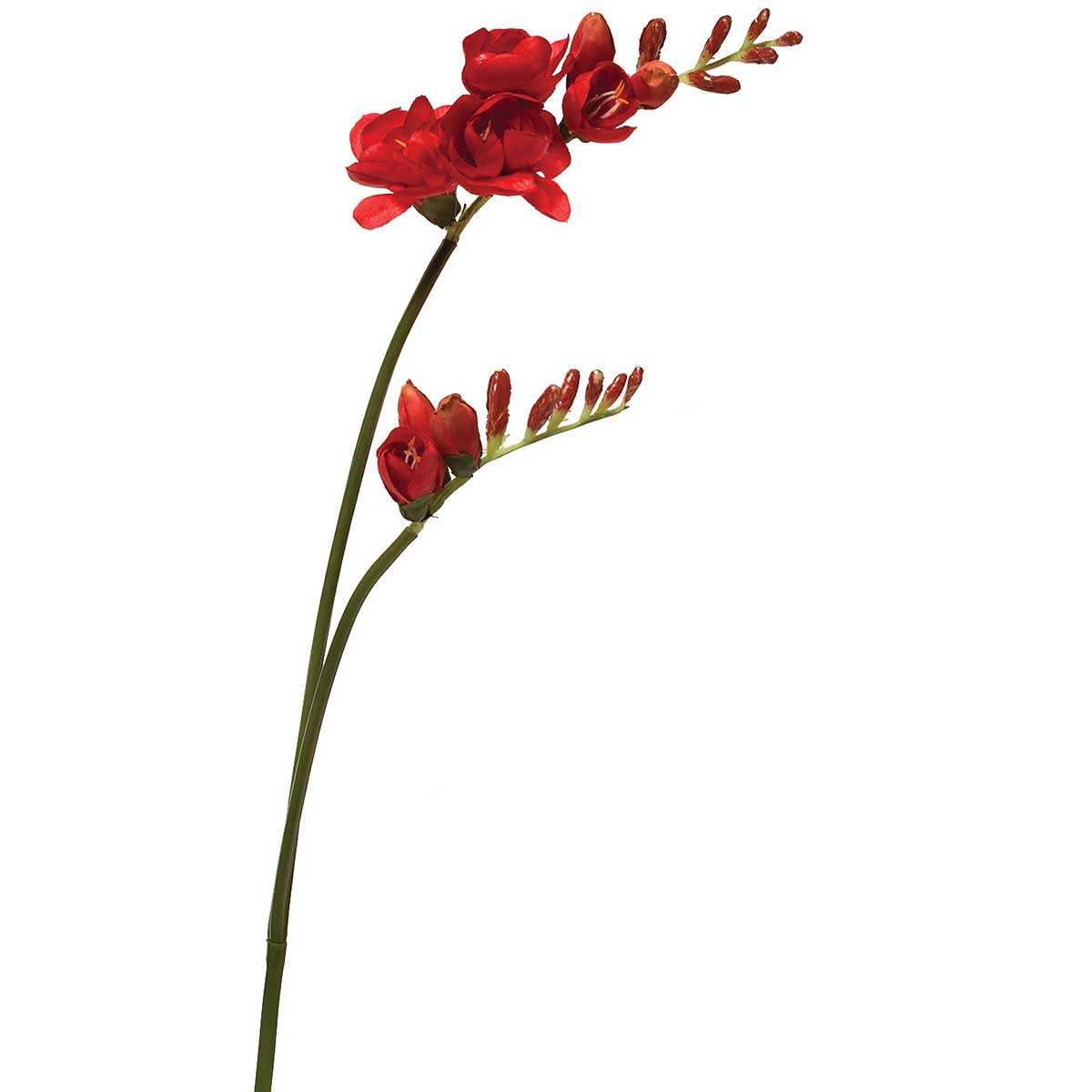 "RIO FREESIA X2 29"" RED *22v"