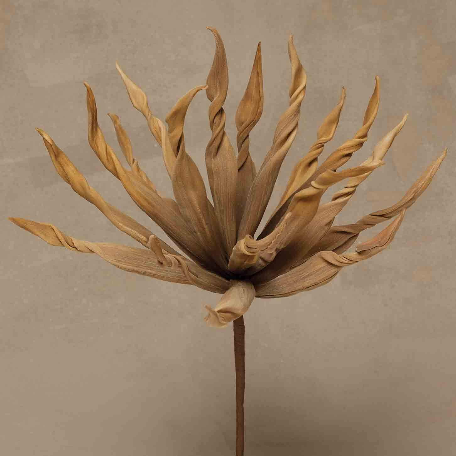 "Tan TWISTED SPIKE BUSH 14""*50b"