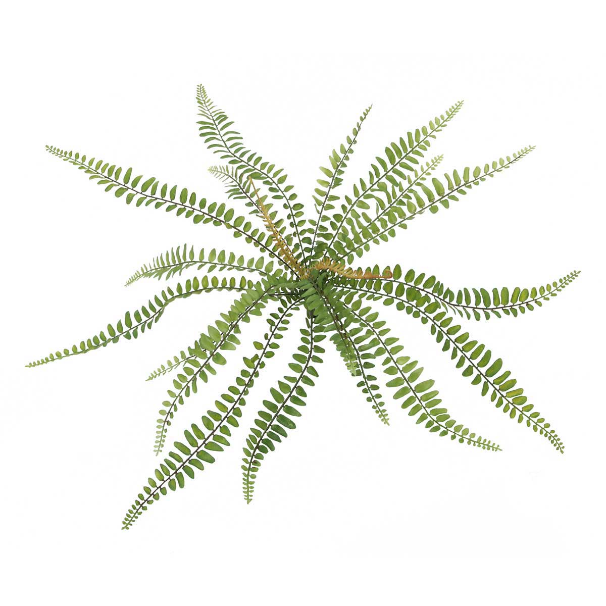 Sword Fern Bush 15� M9113