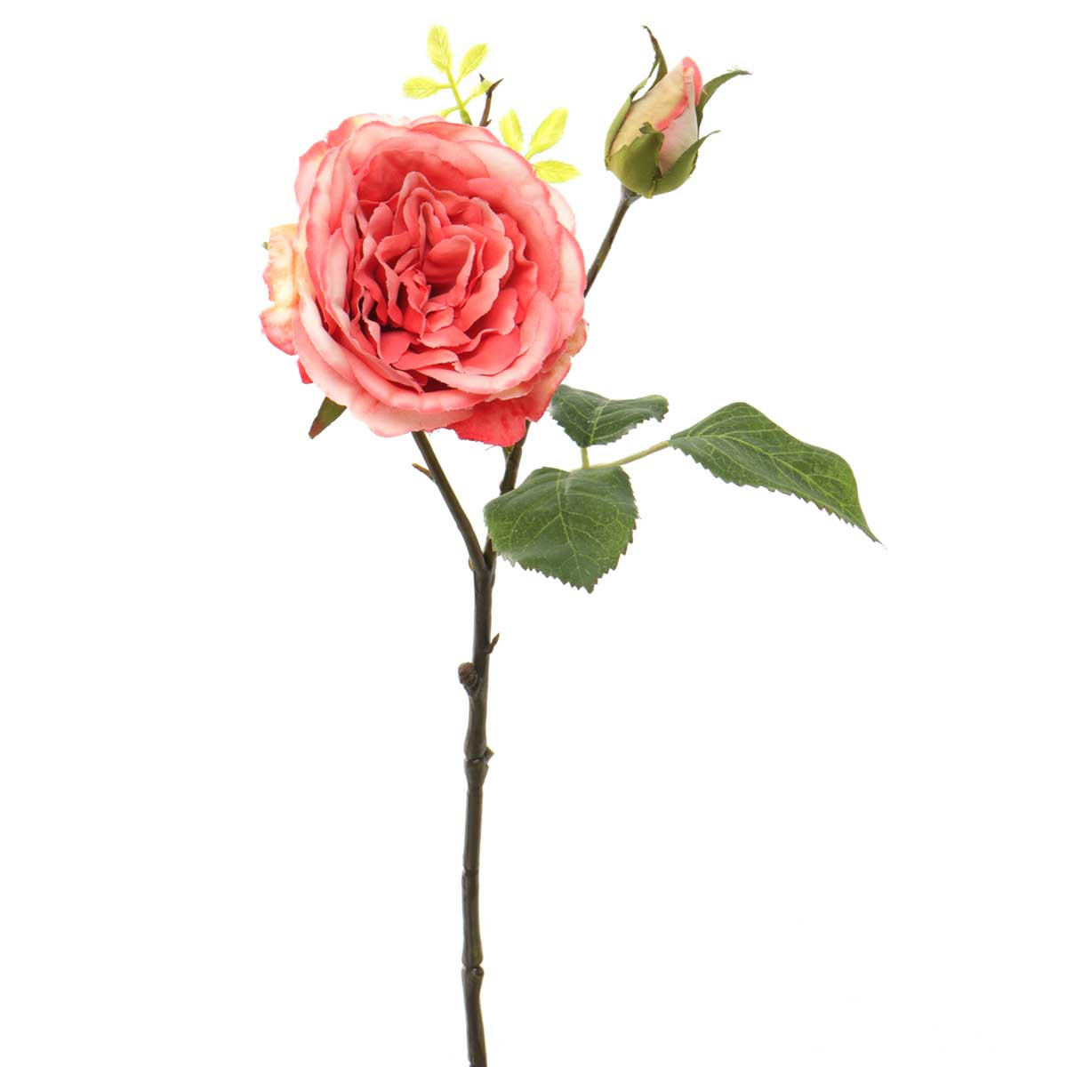 "CABBAGE ROSE WITH BUD 15"" CORAL"
