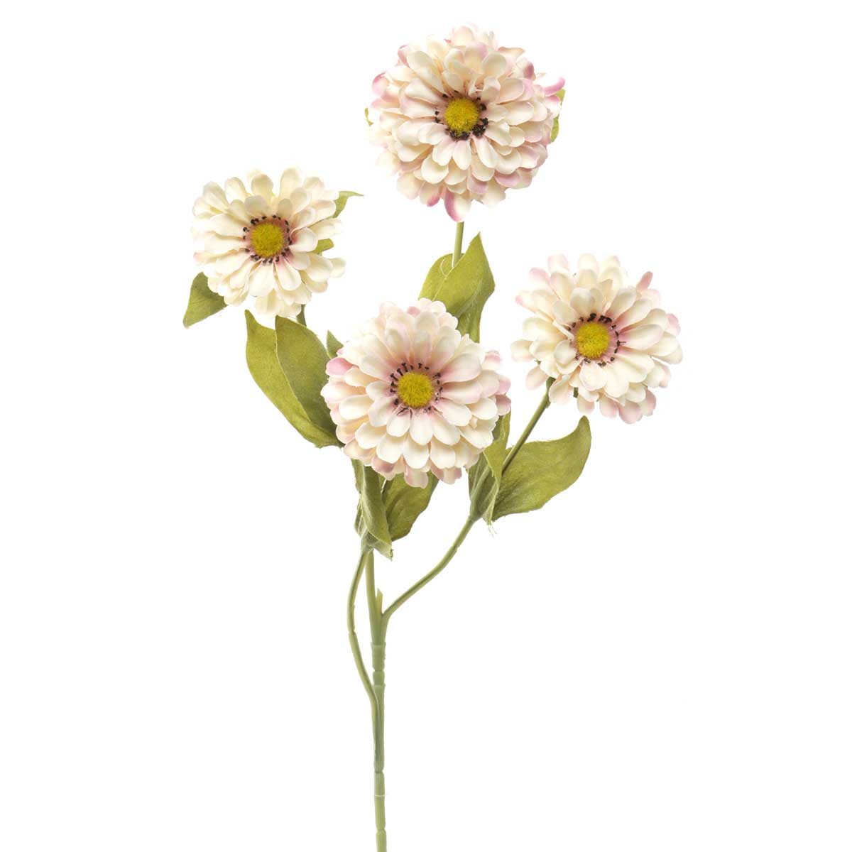 "MINI ZINNIA 5""X23"" CREAM"