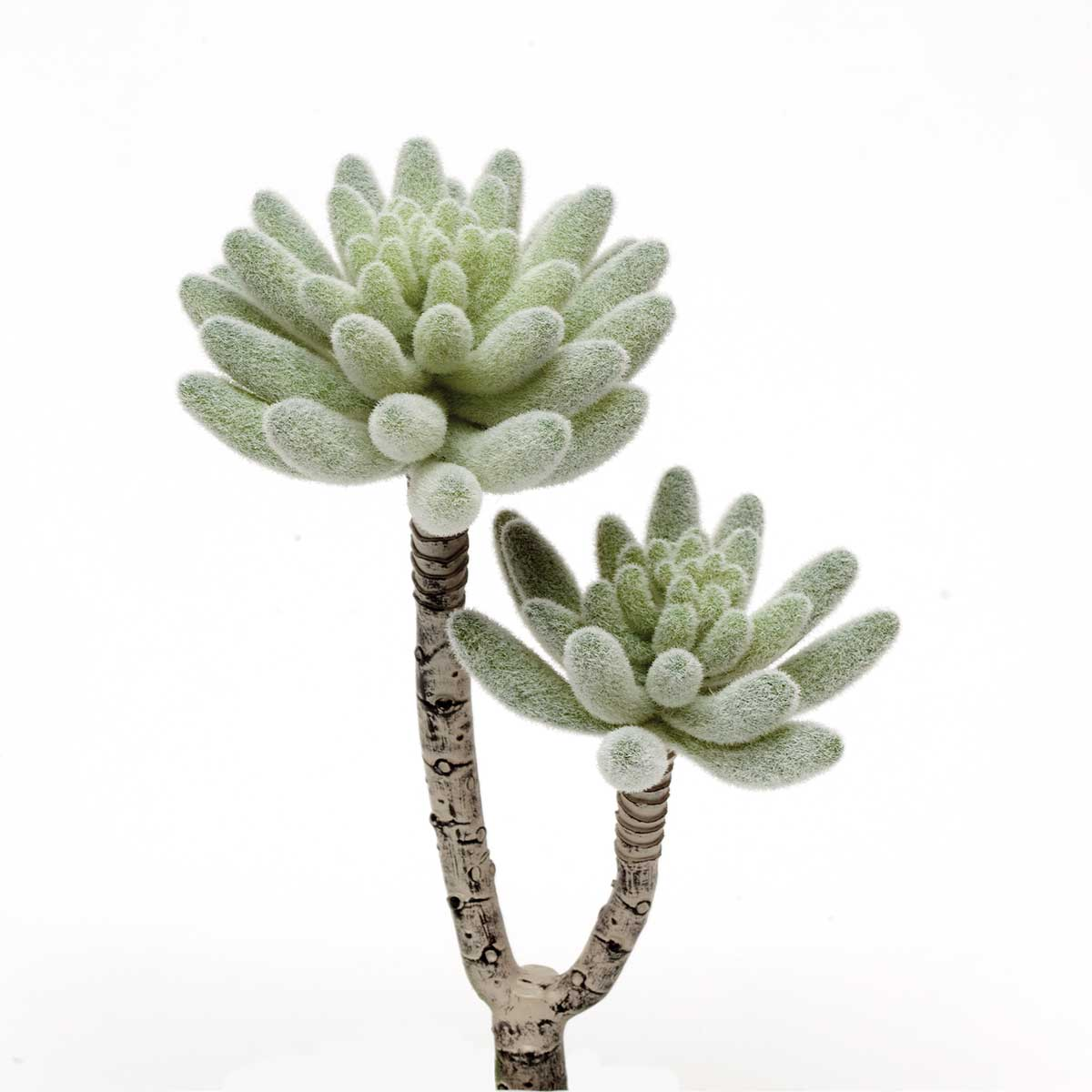 """Frosted Double Rosette Succulent 3.5""""x8.75"""""""