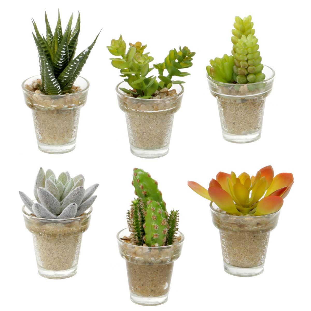 """Mini Succulent In Pot 6 Assorted 2""""x3""""-4.5"""""""