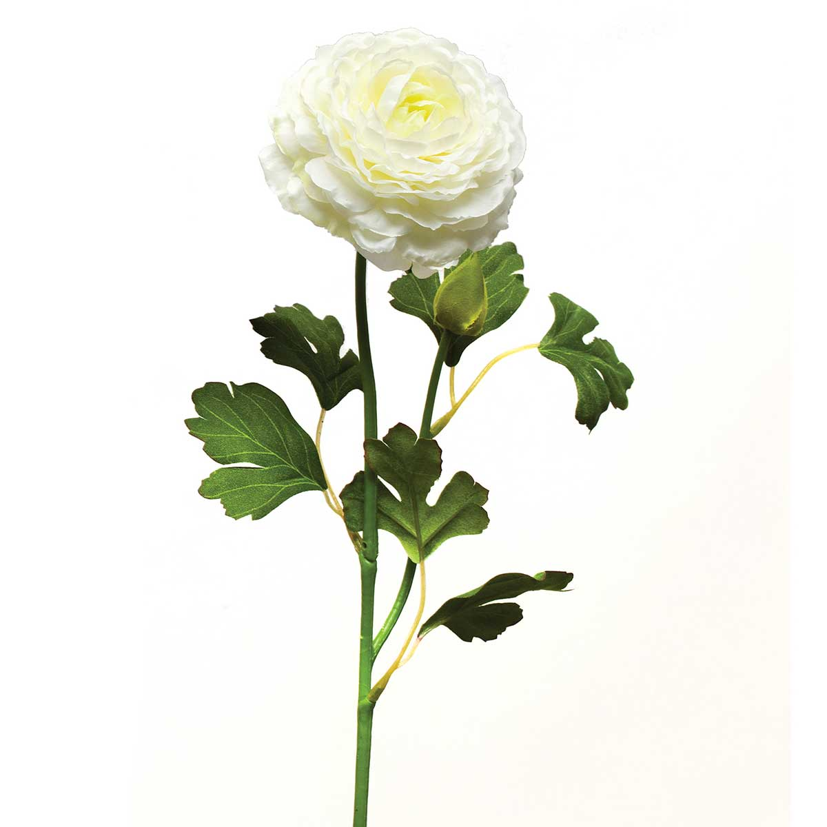 "English Ranunculus X2 3""x21"" Cream"