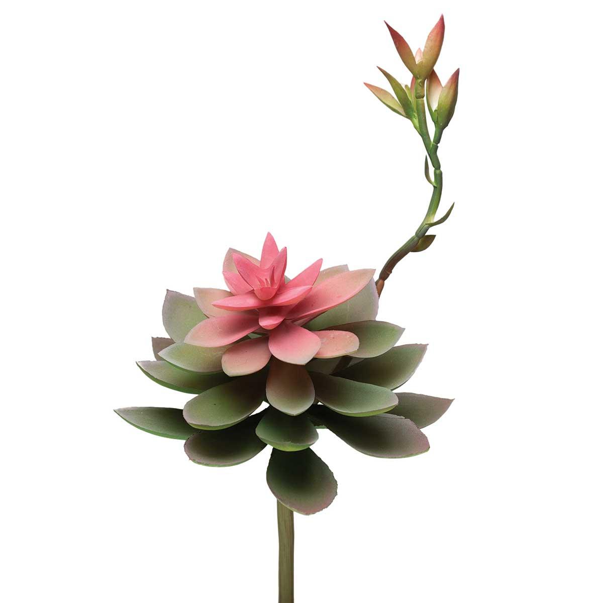 CORAL FLOWERING