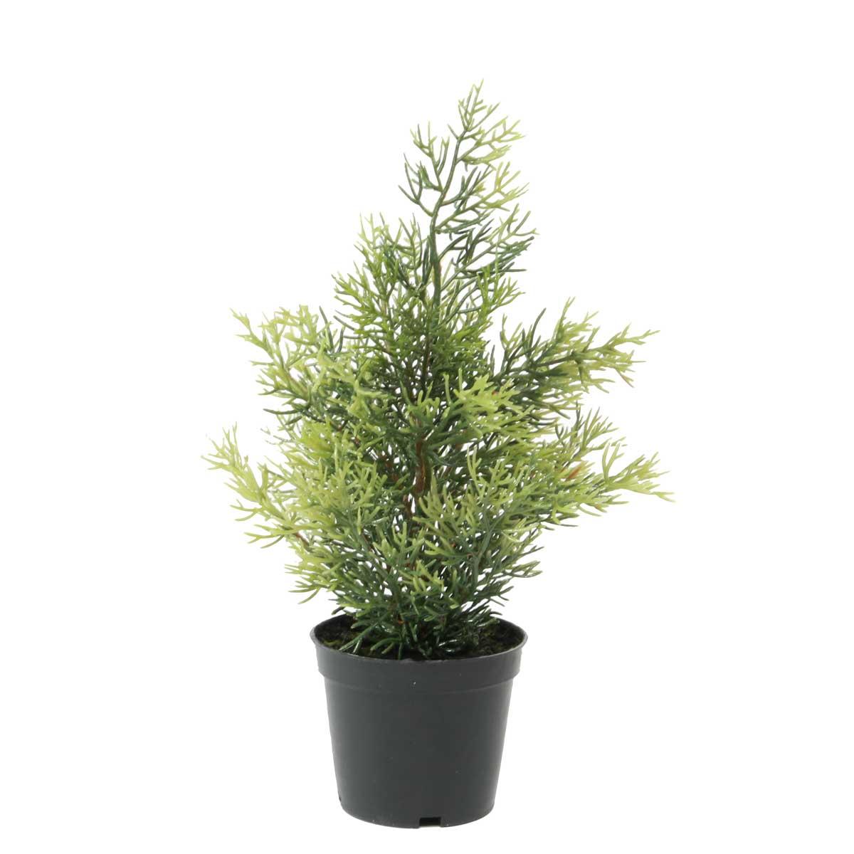 "ARBORVITAE TREE IN POT 11"""
