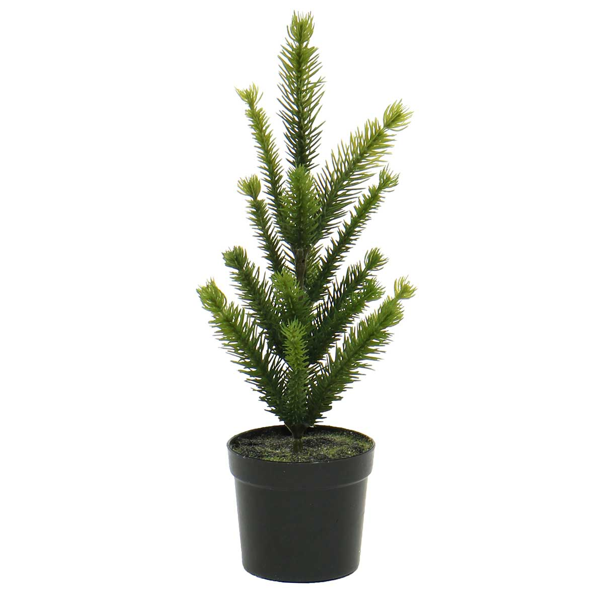FIR TREE IN BLACK