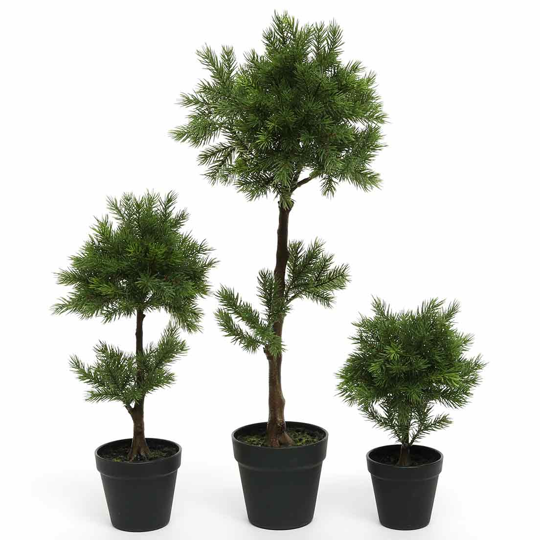 BALSAM FIR TOPIARY TREE IN BLACK HEAVY PLASTIC POT SET OF 3