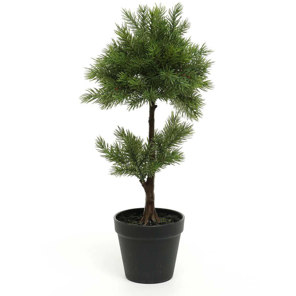 """BALSAM FIR TOPIARY TREE IN BLACK HEAVY PLASTIC POT 8""""X18.5"""""""
