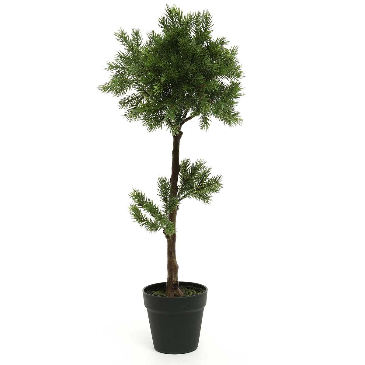 """BALSAM FIR TOPIARY TREE IN BLACK HEAVY PLASTIC POT 10""""X28"""""""