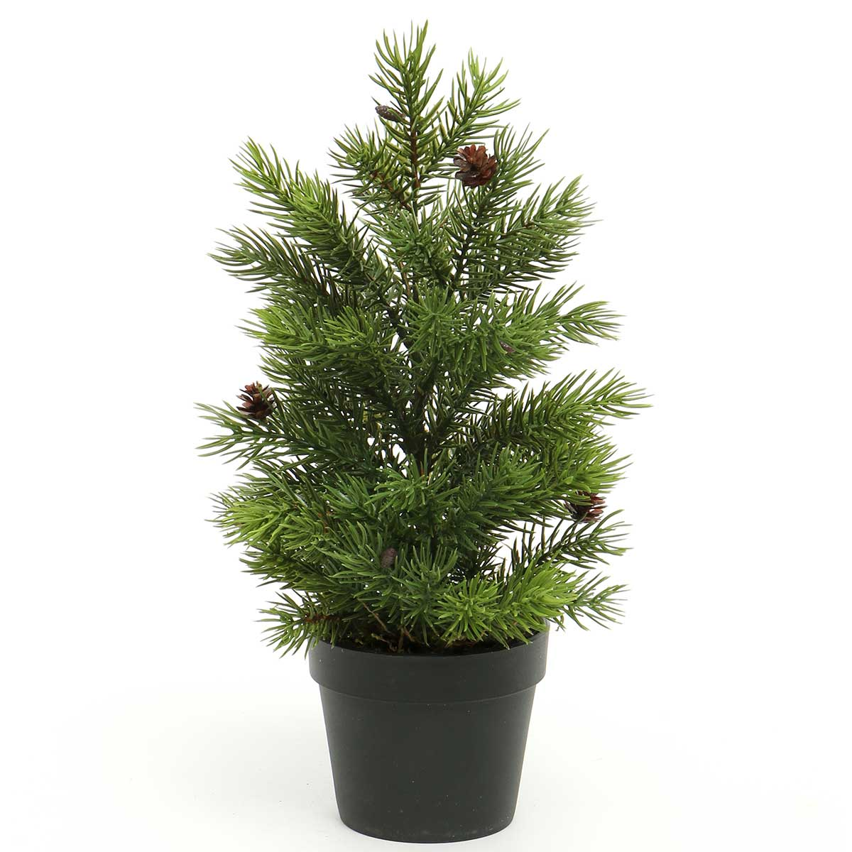 SPRUCE TREE WITH PINECONES IN